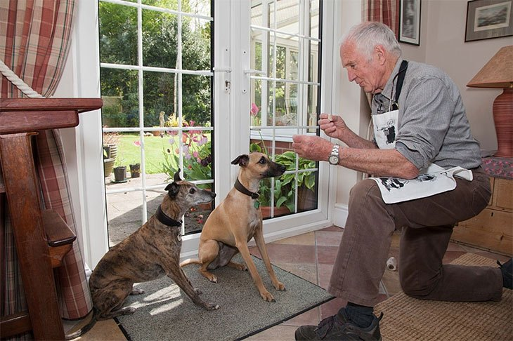 natural balance senior dog food reviews