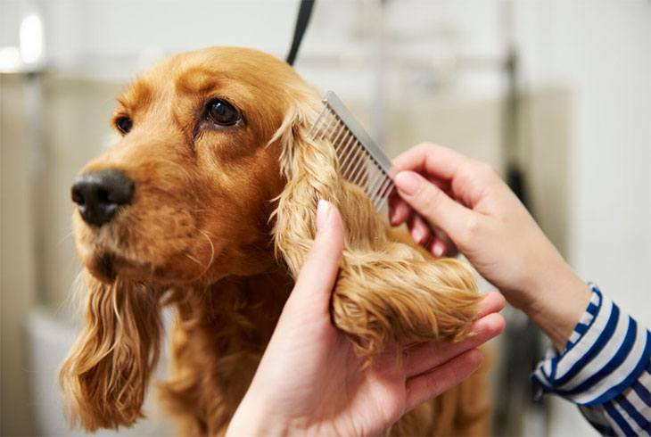 pet clippers for matted hair