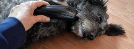 Heavy duty dog clippers for matted hair