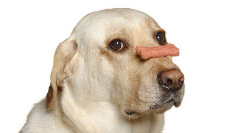 natural balance senior dog food